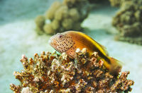 Marine Life in the Red Sea. Egypt