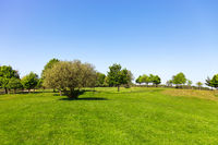 Green field, tree and blue sky