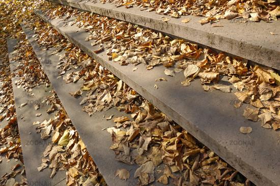 Treppenstufen mit Herbstlaub - Stairs with foliage