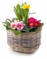 Pflanzschale mit Frühlingsblumen freigestellt