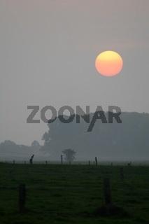 Sonnenuntergang ueber den Wiesen