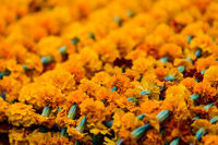 Closeup on marigold garlands