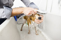 bathing a cute dog