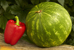 Melone, Paprika und Wurzel