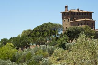Felder mit Olivenbäumen rund um Palazzo Massaini, Nähe von Montalcino, Toskana, Italien