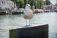 Seagull at the port 2