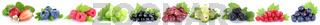 Sammlung Beeren Erdbeeren Himbeeren Johannisbeeren Trauben Weintrauben Früchte in einer Reihe Freisteller freigestellt