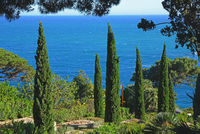 Cypresses in botanical garden Marimurtra, Blanes, Costa Brava, Spain