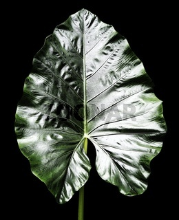 Pflanzenblatt