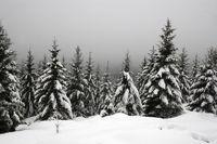 Tiefverschneiter Harz am Goetheweg zum Brocken