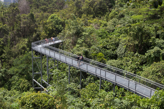 Southern Ridges Canopy Walk Singapore & Photo Southern Ridges Canopy Walk Singapore Image #9396113