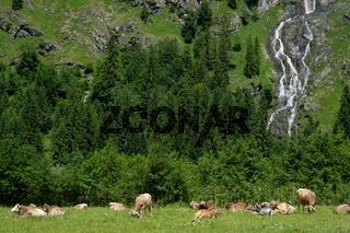 Alm mit Kühen und Wald und Wasserfall im Allgäu