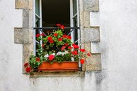 Open window with a flowerpot in front.