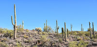 Arizona Desert Landscape with saguaro cactus in the Tonto National Forest.