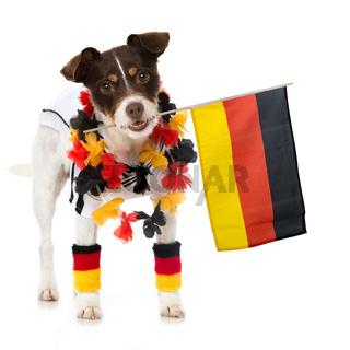 Hund im Fußballfieber