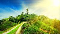 Panorama view of tea plantation, Malaysia