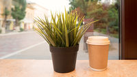 Takeaway cup of hot drink and pot with grass on windowsill