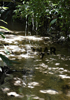 Bach in Ecoparque de Una, Atlantischer Regenwald, Mata Atlântica, Bahia, Brasilien, Südamerika