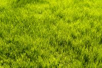 green meadow for backgrounds and compositions