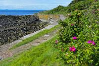Uferweg Fife Coastal Path bei Crail