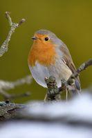 robin at the bird house