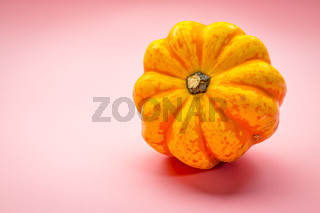 winter squash on pink background