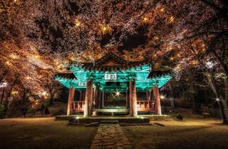korean pagoda among cherry blossoms.