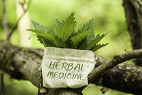 Stinging Nettle in a jute bag with the word Herbal Medicine