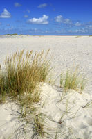 Dünenlandschaft am Ellenbogen, List, Sylt, nordfriesische Inseln