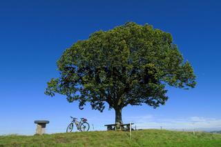 Fahrradpause unterm Lindenbaum auf einem Huegel