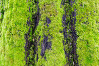 Green moss on stump tree in deep forest