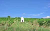 Trullo in Vineyard of Woellstein in Rhinehessen,Rhinekland-Palatinate,Germany