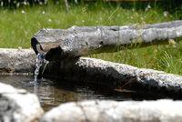 hölzerner Brunnen in Südtirol