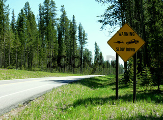 Wildwechsel - Deers crossing