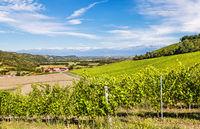 Vineyards of Piedmont, Italy