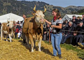 Präsentation Simmentaler Kühe an der Swiss Cow Topschau Saanenland, Gstaad, Schweiz