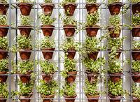 Plants in flower pots