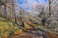 Wanderweg im Elbsandsteingebirge - Hiking trail in the Elbe sandstone mountains
