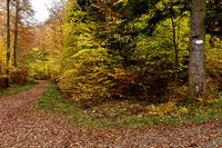 autumn forest, forest path, forest road,