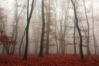 mist in the woods in autumn season