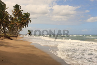 Caribbean Beach with palms trees