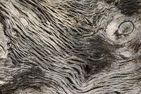Texture / Background / Motif - old bony tree bark