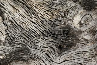 Textur / Hintergrund / Motiv - alte knöcherne Baumrinde
