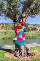 Olive tree dressed in colorful knitted sweater