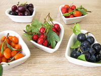 Wild fruits in autumn with cornelian cherries, sea buckthorn fruits, rose hips, sloes fruits and haw