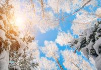 blue sky in beautiful winter forest