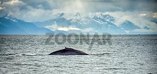 Alaska - Travel Destination - Whale Watching Adventure