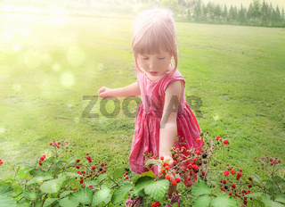 Sweet little girl collecting raspberry