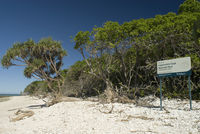 Lady Musgrave Island beach