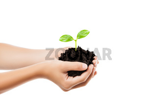Human hand holding green sprout leaf growth at dirt soil